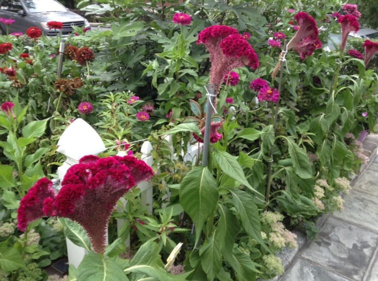 Summer Blooms - Mount Kernon.